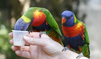 Hand Reared Birds for Sale | Parrots | Macaws | Marp Centre