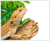 Reptile Setups for Sale