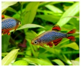 Tropical Fish for Sale Marp Centre