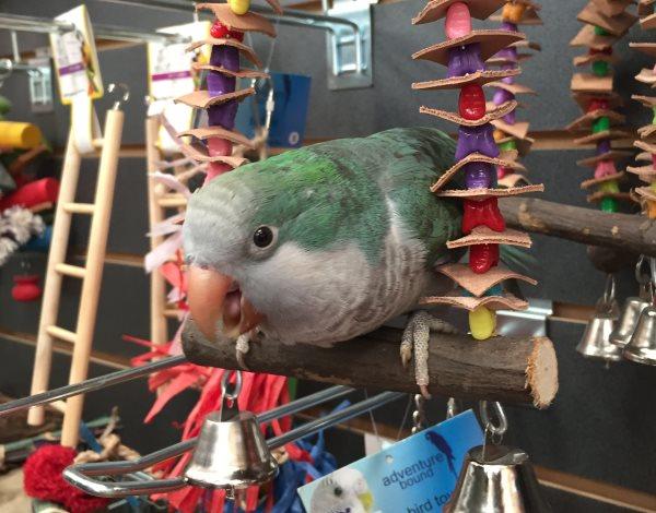 Hand Reared Birds for Sale   Parrots   Macaws   Marp Centre