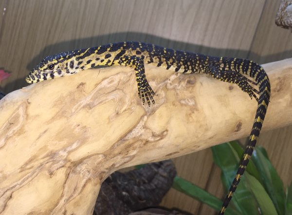 Monitors and Tegus for Sale | Marp Centre | UK Delivery